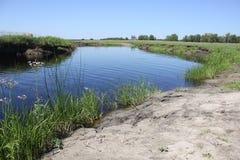 Zielone płochy blisko do jeziora 31196 Zdjęcie Stock