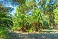 Zielone palmy Obraz Stock