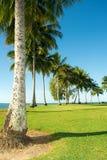 Zielone palmy na plaży, zatoka zdjęcie royalty free