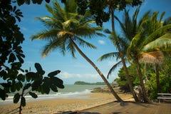 Zielone palmy na plaży, zatoka obrazy royalty free