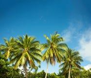 Zielone palmy na plaży, zatoka fotografia royalty free