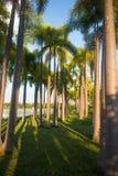 Zielone palmy zasadzać w parku obrazy royalty free