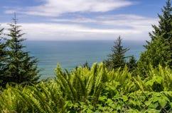 Zielone paprocie i drzewa obramiają Pacyficznego ocean Zdjęcie Stock