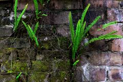 Zielone paprocie na ścianach zdjęcia stock