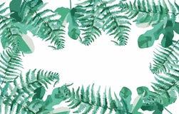 Zielone paprocie w lesie royalty ilustracja