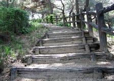 zielone pastwisk kroków Fotografia Royalty Free