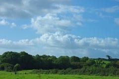 zielone pastwiska Obrazy Stock