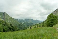zielone pastwiska Zdjęcie Royalty Free