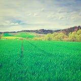 zielone pastwiska Fotografia Stock