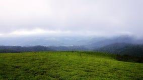 zielone pastwiska Zdjęcia Stock