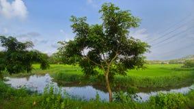 zielone pastwiska obraz stock