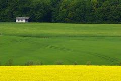 zielone pola, żółty fotografia stock