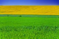 zielone pola, żółty obraz royalty free