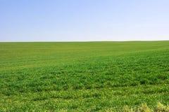 zielone pola Zdjęcie Stock