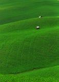 zielone pola Obrazy Royalty Free