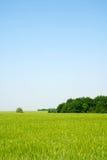 zielone pola obraz stock