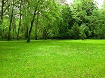 zielone pola Obrazy Stock