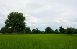 zielone pola Fotografia Stock