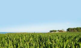 zielone pola bujny zdjęcie royalty free