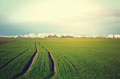 zielone pola do nieba Zdjęcia Stock