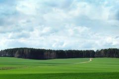 zielone pola do nieba zdjęcie stock