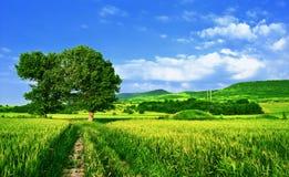 zielone pola drogę Zdjęcia Royalty Free