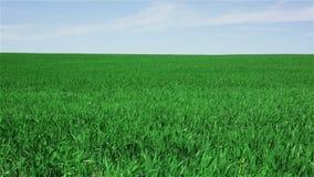 zielone pola krajobrazu
