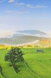 zielone pola krajobrazu Obraz Royalty Free