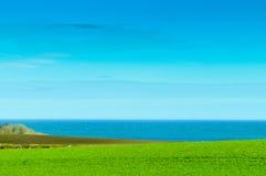 zielone pola krajobrazu Zdjęcie Stock