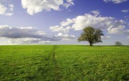 zielone pola krajobrazu lato Zdjęcie Royalty Free