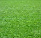 zielone pola kwadratu trawy Obrazy Royalty Free
