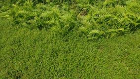 zielone pola Natura cud Zdjęcia Royalty Free