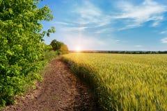 zielone pola pszenicy Obrazy Stock
