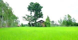 zielone pola ryżu Fotografia Stock