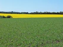 zielone pola tło obraz royalty free