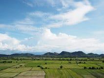 zielone polowe ryżu Obraz Stock