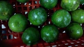 zielone pomarańcze Obraz Stock