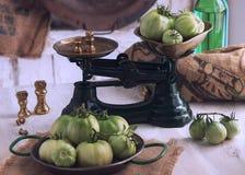 zielone pomidory Zdjęcie Stock