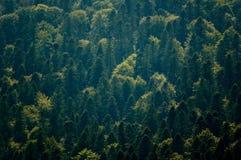 zielone powietrznej leśną widok Zdjęcie Stock
