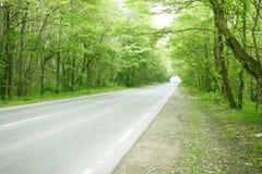zielone przemijająca lasów road Zdjęcie Stock