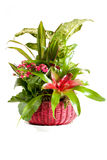 zielone przygotowania rośliny Zdjęcie Royalty Free