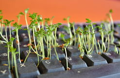 Zielone rośliny między czarnymi kluczami w komputerowej klawiaturze Zdjęcia Royalty Free