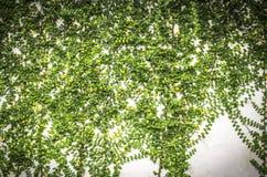 Zielone rośliny na betonowej ścianie Fotografia Royalty Free