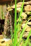 Zielone rośliny na tle mała siklawa Zdjęcia Stock