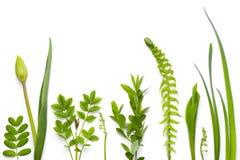Zielone rośliny odizolowywać na białym tle obraz royalty free