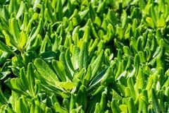 Zielone rośliny z cienkich liści tekstury ściennym wzorem obraz royalty free