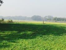 zielone rośliny zdjęcie stock