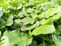 zielone rośliny Fotografia Stock