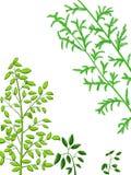 zielone rośliny Fotografia Royalty Free