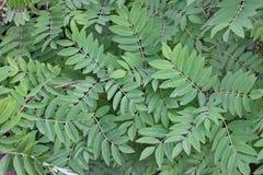 Zielone rośliny Obrazy Royalty Free